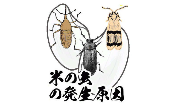 米の虫の発生原因